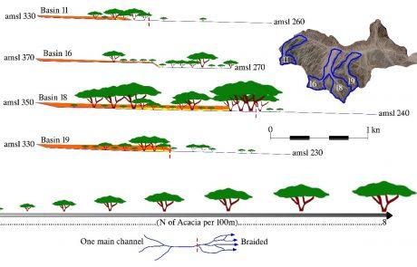 בחינת פיזור עצי שיטה באגן נחל שיטה והקשר לתנאים הגאומורפולוגיים באגני ניקוז מישניים.
